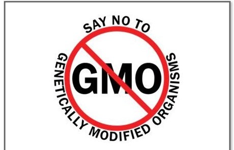 Say No to GMO yard sign