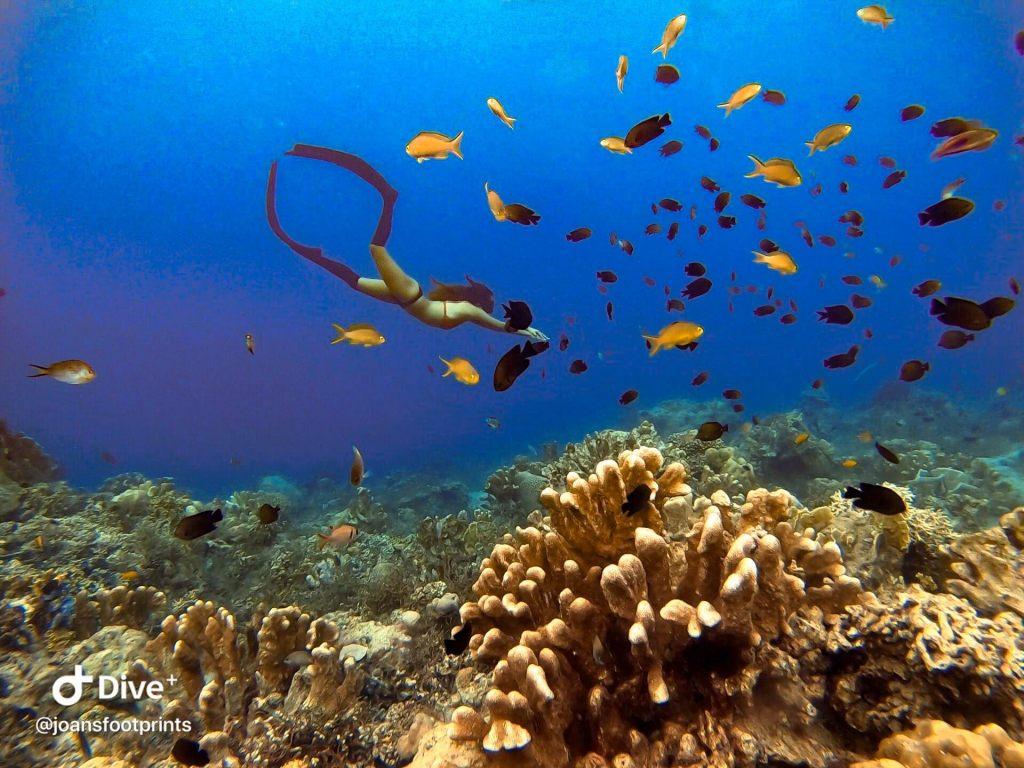 Dive7000 resort in batangas