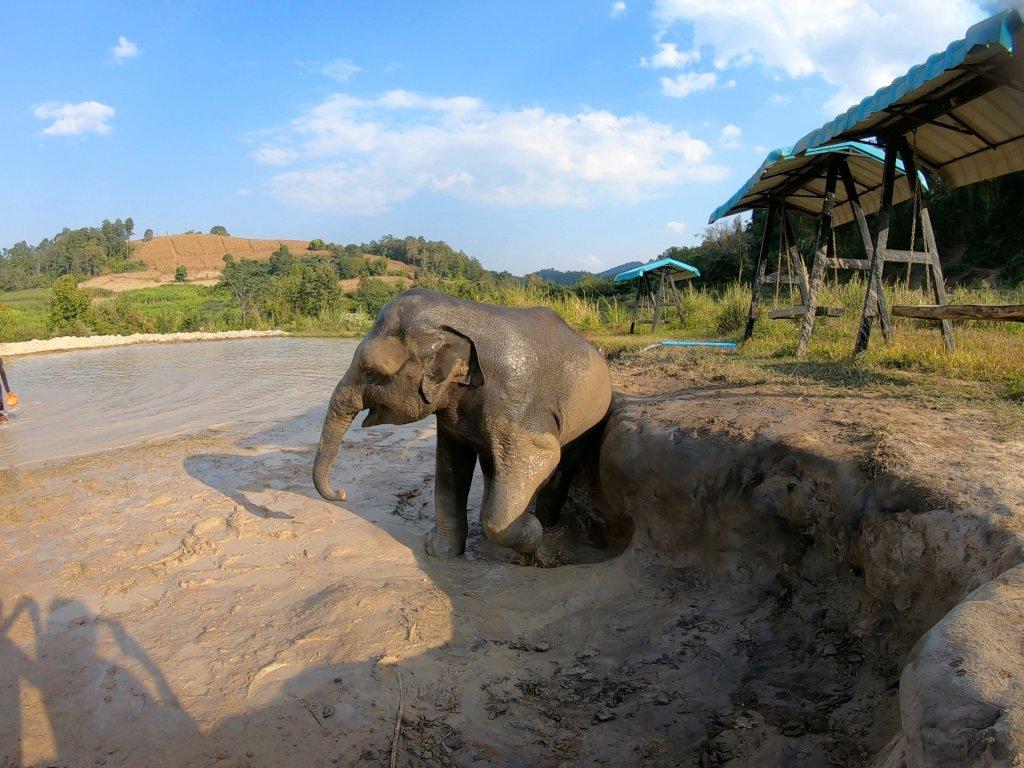mud bath at elephant jungle sanctuary