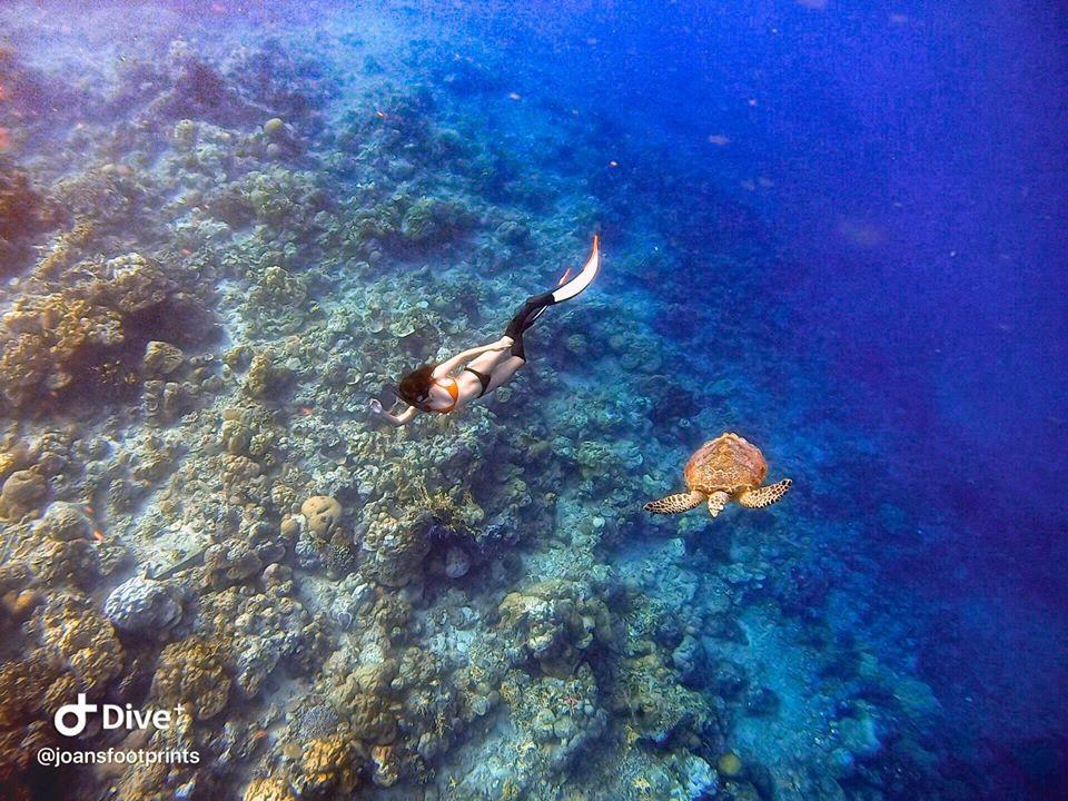 dive7000 resort batangas