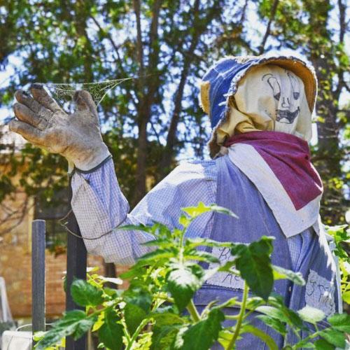 Community Garden Scarecrow