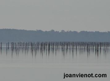 Decoy pilings 2 in hazy bay