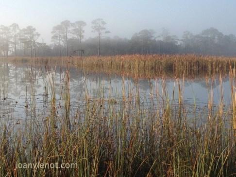 2012-1103 Western Lake 2