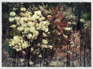 2012-1115 Wildflowers4