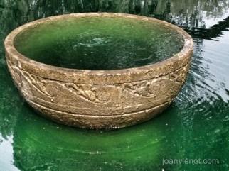 Eden bowl of green