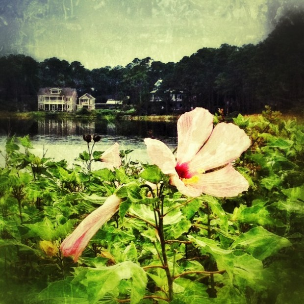 Photograph of hibiscus at Oyster Lake in Santa Rosa Beach, FL