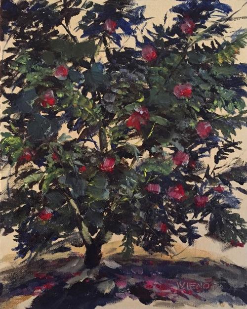 2014-1225 Camellia at Eden