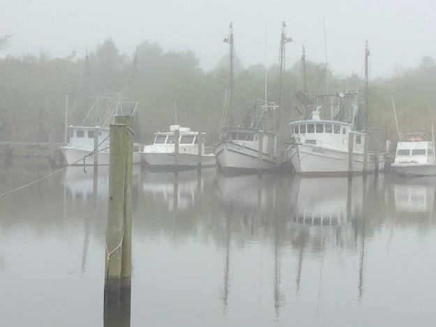 Scipio Fog Photo