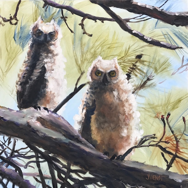 Oil painting of two immature barn owls recently flown from the nest, St. George Plantation, St. George Island, FL