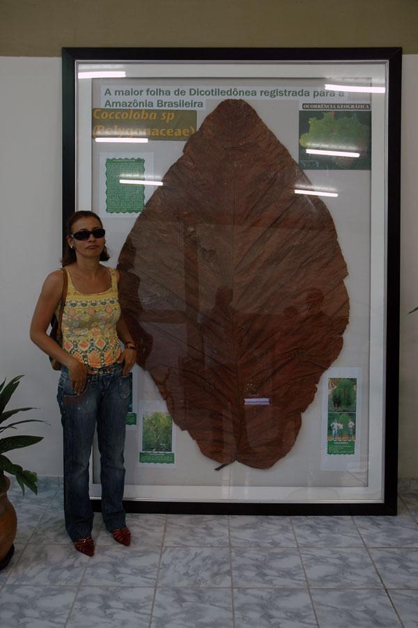 A maior folha