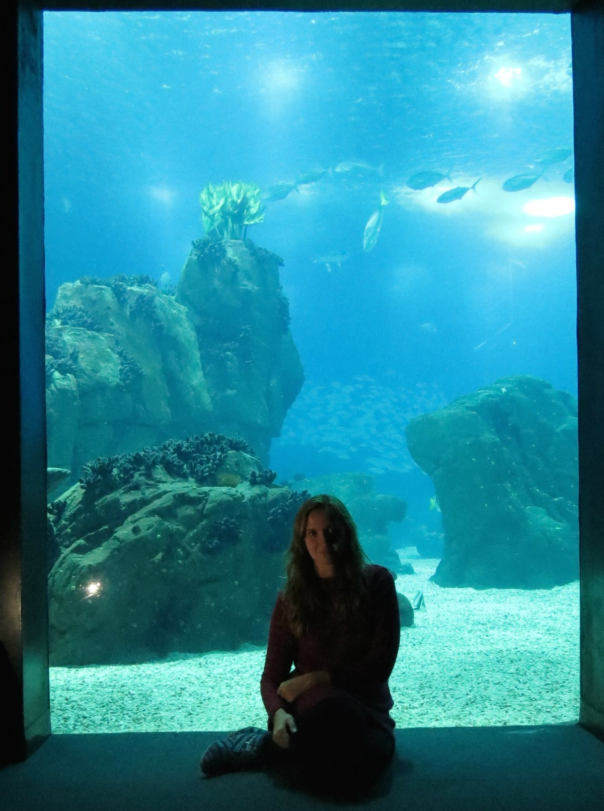 iuli aquario