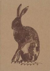 Hare, © Jo Aylward