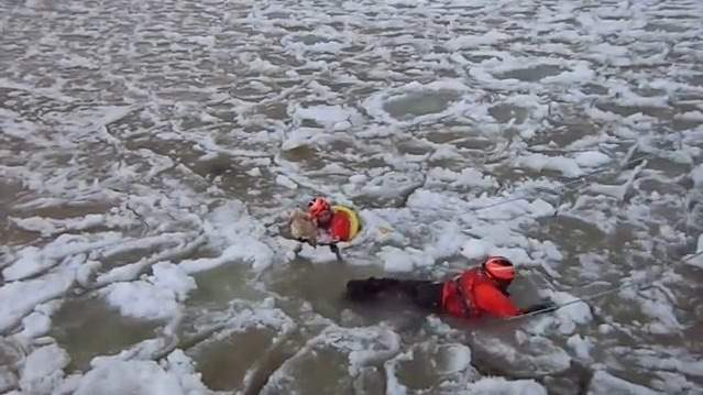 Coast Guard pulls lucky Labrador from icy Michigan channel