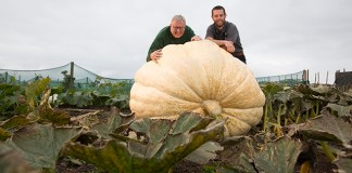 The giant pumpkin at Hyde Hall. Credit: RHS/Suzanne Plunkett