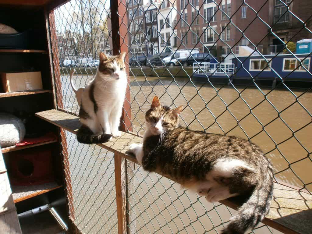 Cat Adoption Amsterdam