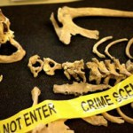 Forensic Anthropologist Job Description Example