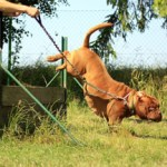 How to become a Certified Dog Trainer