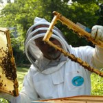 How to become a Certified Beekeeper