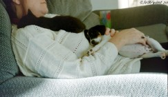 Jack and Chevvy as babies.