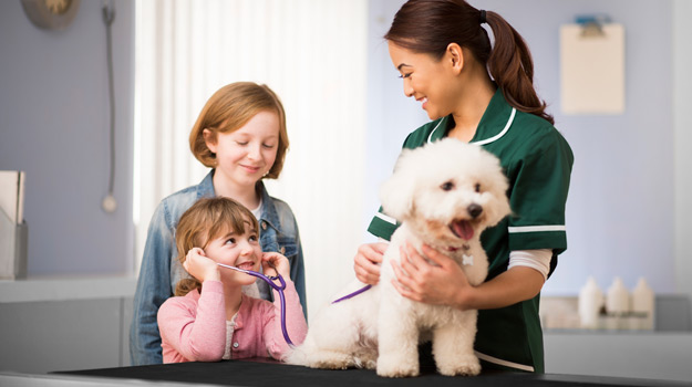 How to Find the Veterinary Nurse Job Thats Right for You
