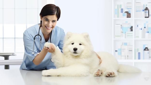A great time to be a veterinarian