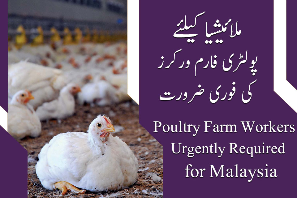 Malaysia Poultry Farm Workers Jobs