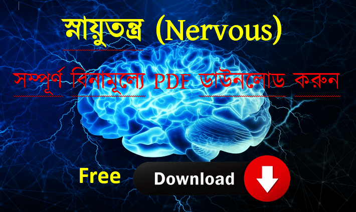 You are currently viewing Nervous system