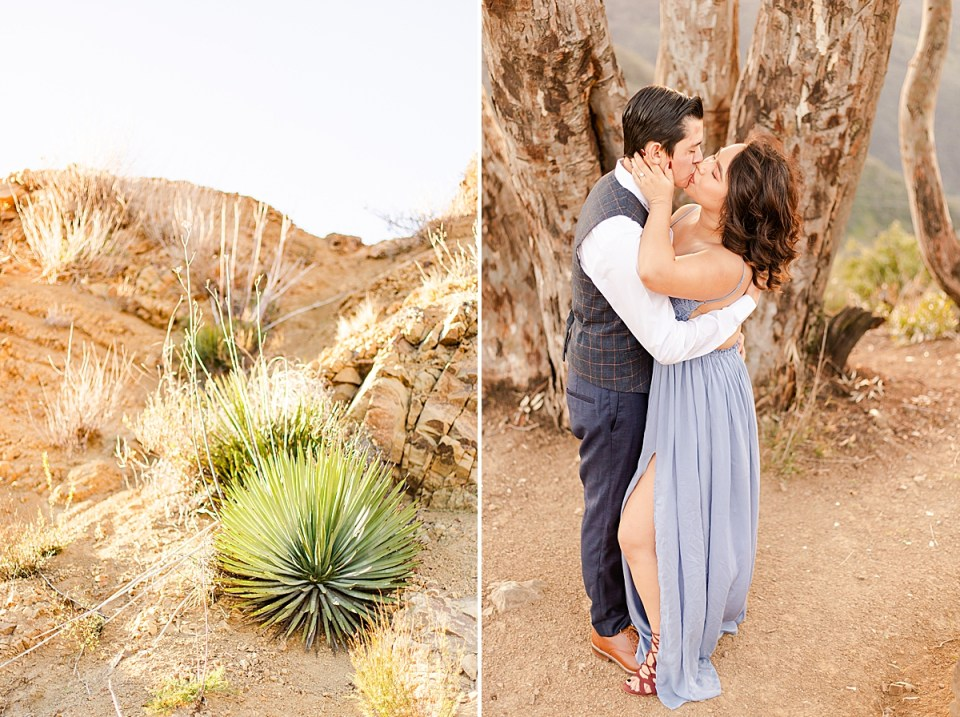 cactus on a hillside and the couple sharing a kiss with a large tree splitting in multiple directions behind them.