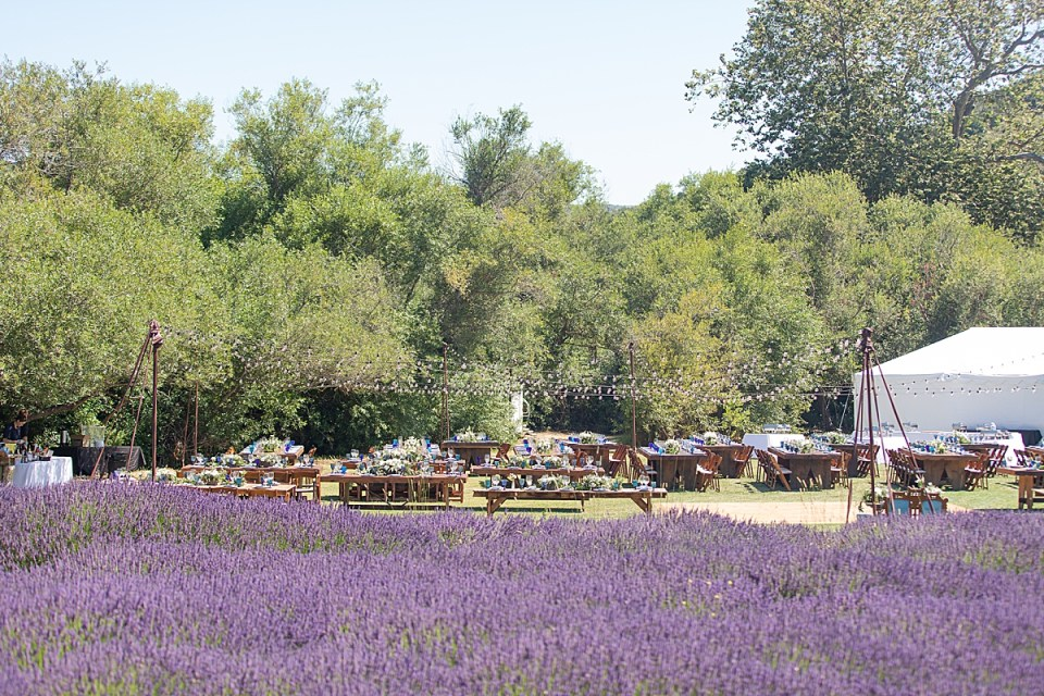 The field of lavender at the couples Rancho San Julian Wedding