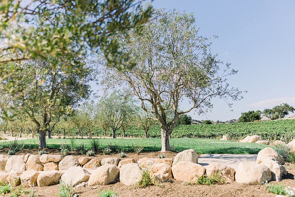 Olive trees, vineyards, and meticulously landscaped grass at the Fess Parker wedding venue.
