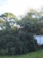 Storm Damage 08-10-18-4DB