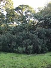 Storm Damage 08-10-18-6DB