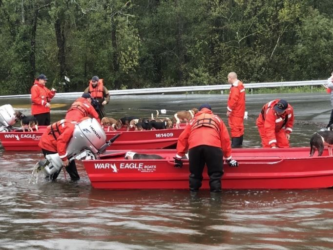 Shallow-Water Response Team 3 crew members rescued four pit bulls, eleven beagles and their owners from rising flood waters caused by Hurricane Florence in Delco, North Carolina on Sunday.The Coast Guard is conducting search and rescue operations in support of state and local emergency operation centers. U.S. Coast Guard photo by Chief Petty Officer Stephen Kelly