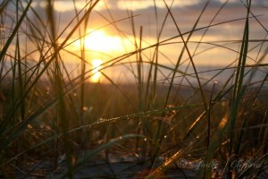 Dune grass sunrise