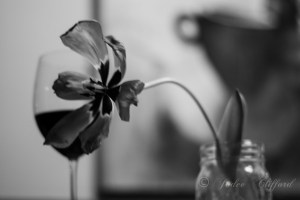 Tulip and a coffee painting, 8x12 BW photograph