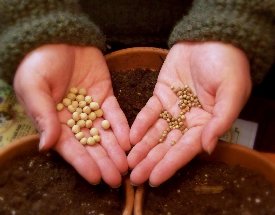 seeds-in-hands