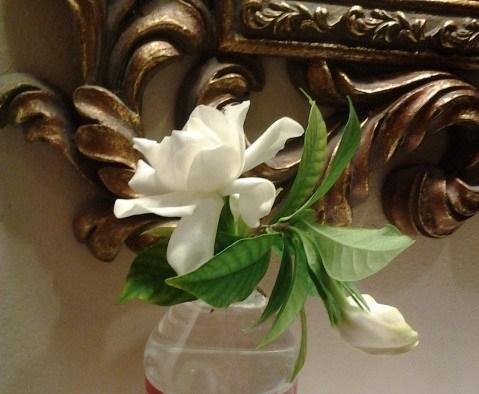 gardenia NOLA