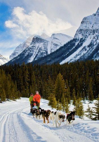 Dog sledding in Banff National Park
