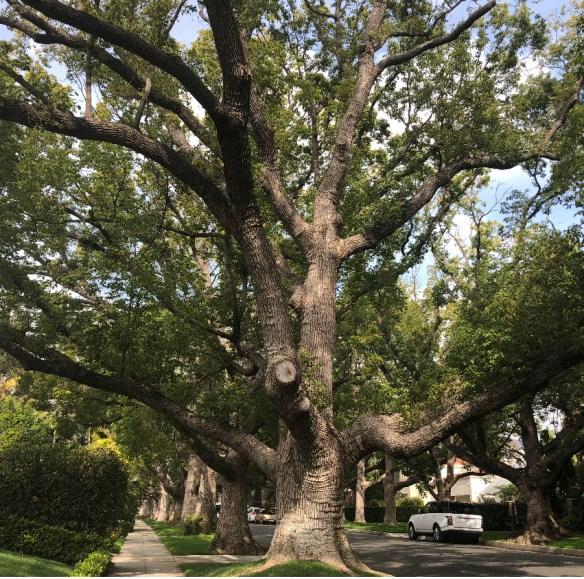 tree_byjodywatley_photo_morning_la