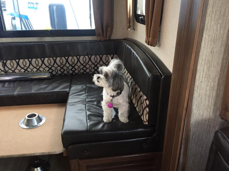 12 Crucial Facts you should know about buying an extended warranty for your RV. We made sure our dogs also liked the RV we chose!