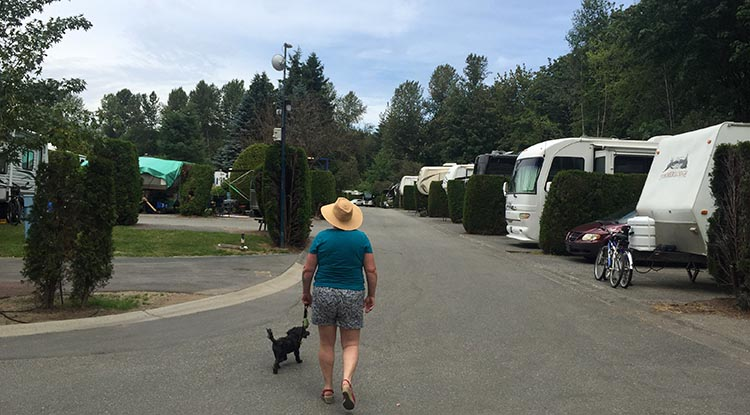 Review of the Burnaby Cariboo RV Park. The roads are quite wide, so once you are out of your spot, driving around is easy. Here's Maggie and Billy returning from a walk along the Brunette River