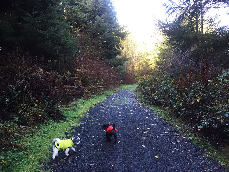 Review of Mystic Forest RV Park, near Klamath, California. There is a nature trail directly off the Mystic River RV Park, which is useful for walking your dogs