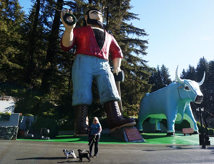 RV Camping Under the Giant Redwoods of Northern California. The enormous statue of Paul Bunyan and his ox, Babe, outside the Trees of Mystery park