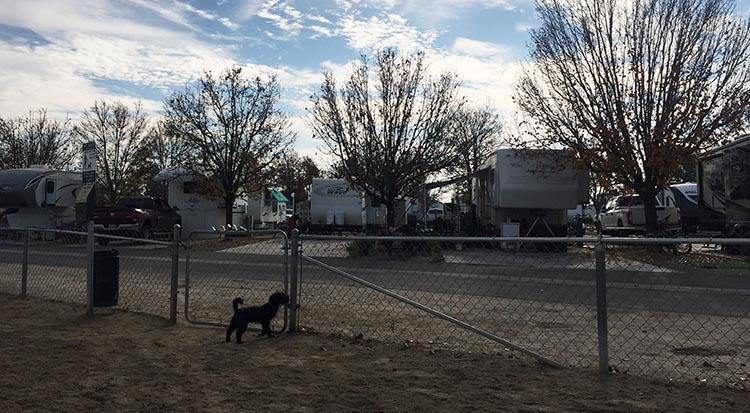 Review of A Country RV Park, Bakersfield, California. This is our dog Billy in the dog run at A Country RV Park in Bakersfield, California