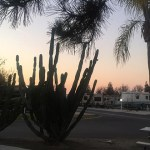 Review and Video of A Country RV Park, Bakersfield, California