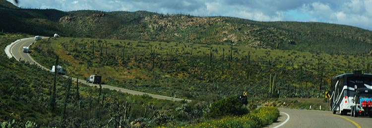 Our Return RV Caravan Trip from Baja California: Santispac Beach to Tecate. There were many miles of cactus scenery on this day