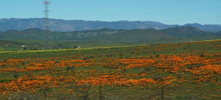 Our Return RV Caravan Trip from Baja California: Santispac Beach to Tecate. The flowers were beautiful!