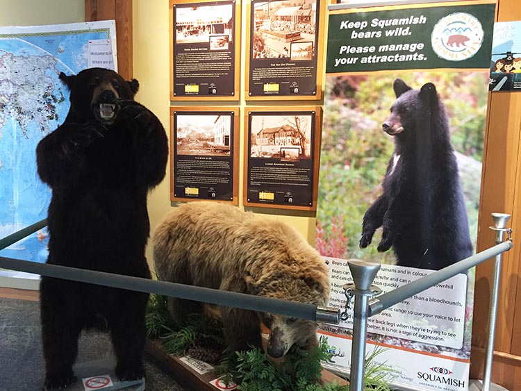 Squamish Adventure Center has lots of information, plus stuffed bears!