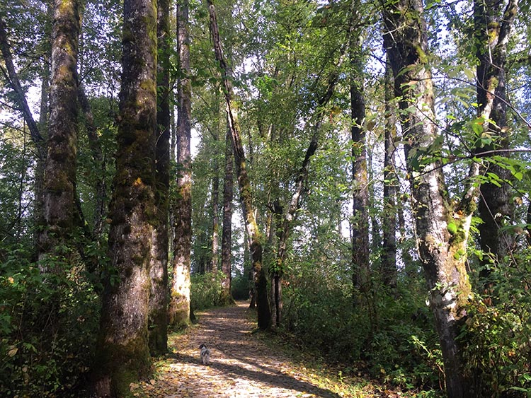 The Tavistock Trail is right next to Fort Camping RV park, and offers a beautiful 4 km loop for hikers