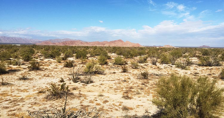 In some parts of El Dorado Ranch, there is a lot more desert than houses